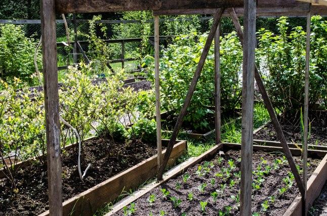 My Garden (17 of 20)