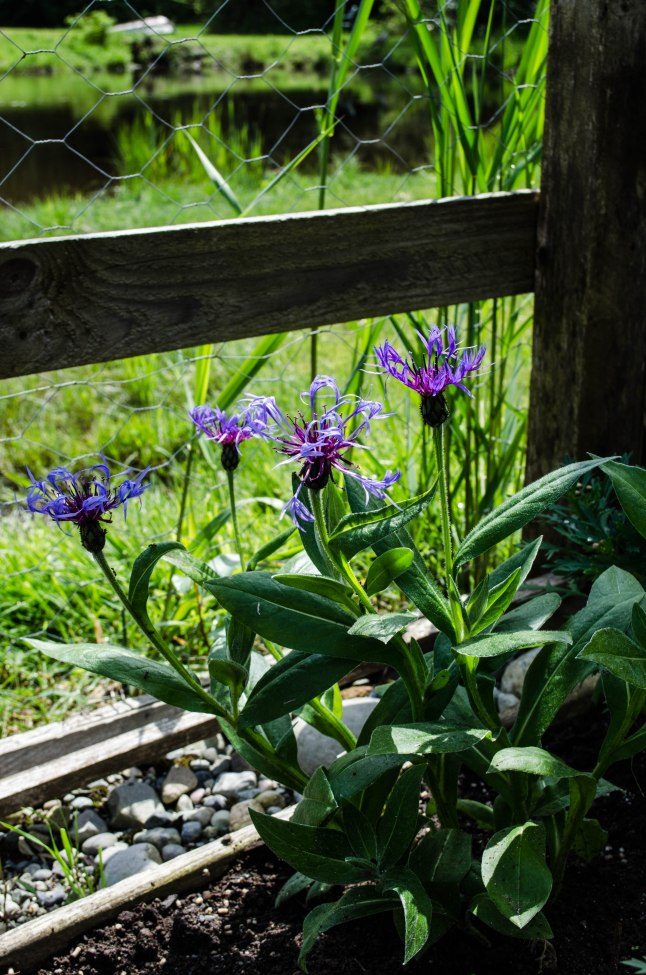 My Garden (7 of 20)