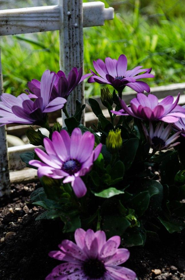 My Garden (8 of 20)