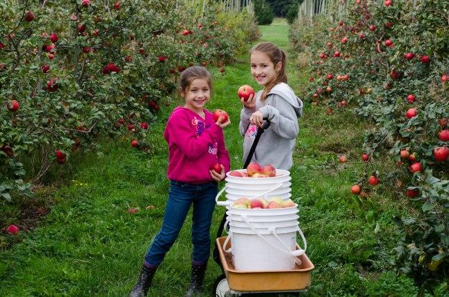 Apple Picking '14 (14 of 31)