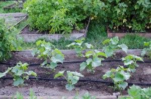 garden (11 of 18)